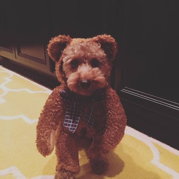 <div class='meta'><div class='origin-logo' data-origin='none'></div><span class='caption-text' data-credit=''>Millie Mae the teddy bear - Trevor Kaylid</span></div>