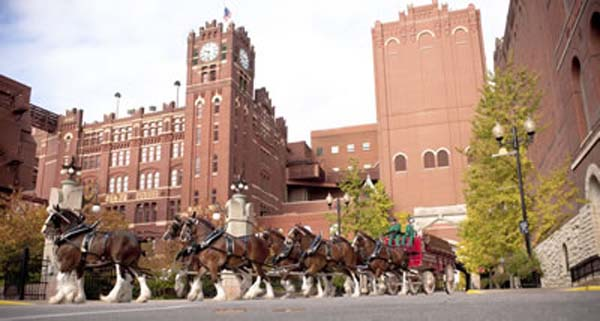 <div class='meta'><div class='origin-logo' data-origin='KTRK'></div><span class='caption-text' data-credit='Anheuser-Busch'>Budweiser Clydesdales turning through the St. Louis Brewery</span></div>