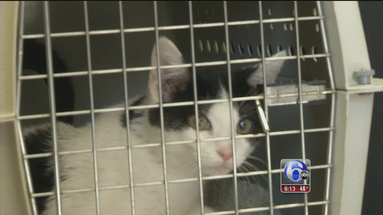Camden County Animal Clinic In Need Of New Home