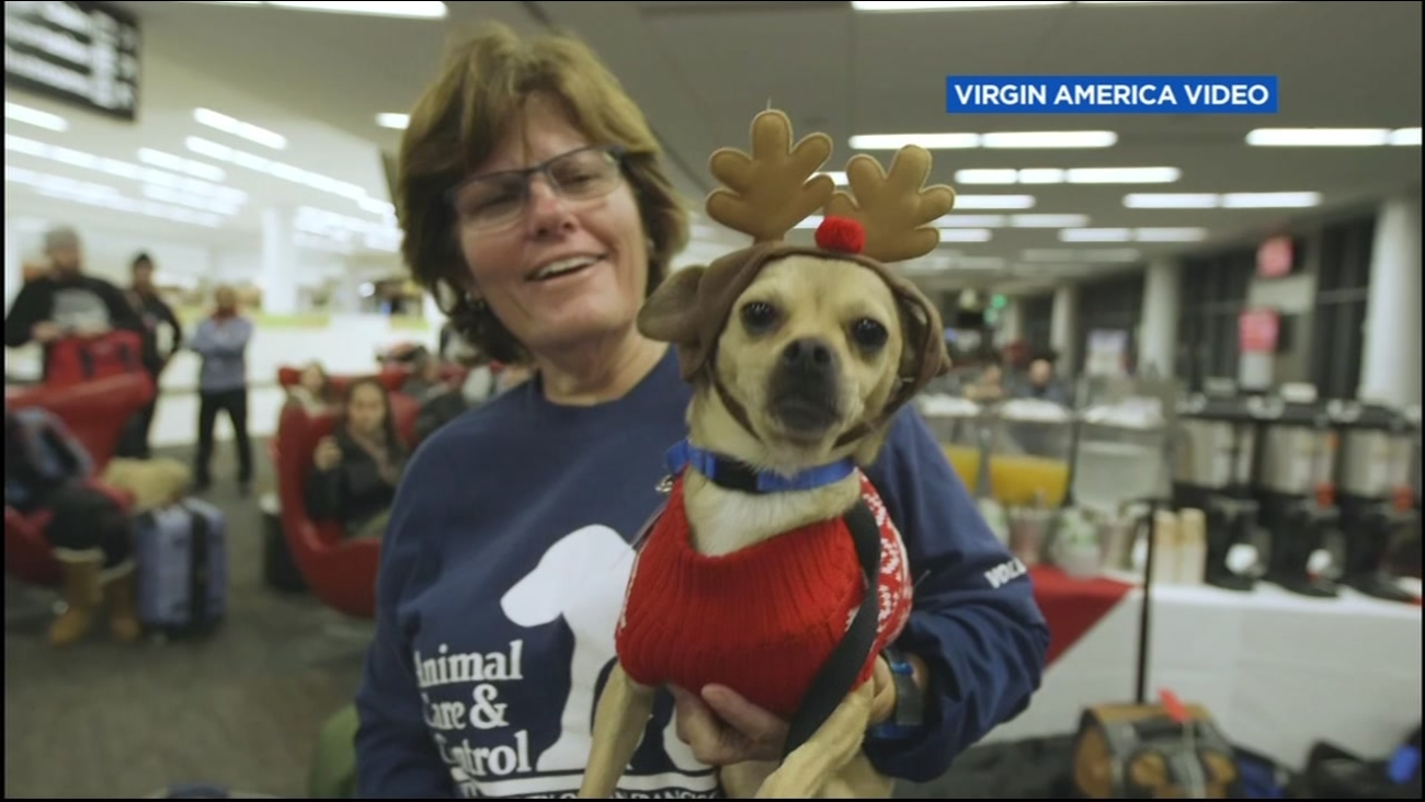 This is an undated image of a handler with a dog wearing antlers.