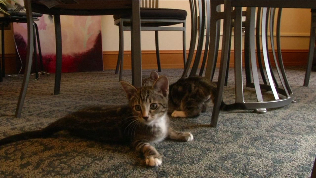 Cats are available for adoption at San Francisco City Hall on Nov. 30, 2016.