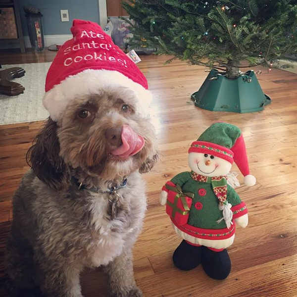 "<div class=""meta image-caption""><div class=""origin-logo origin-image none""><span>none</span></div><span class=""caption-text"">Holiday images sent in by our Eyewitness News viewers! (Courtesy: @chester_phantom_pup/Instagram)</span></div>"