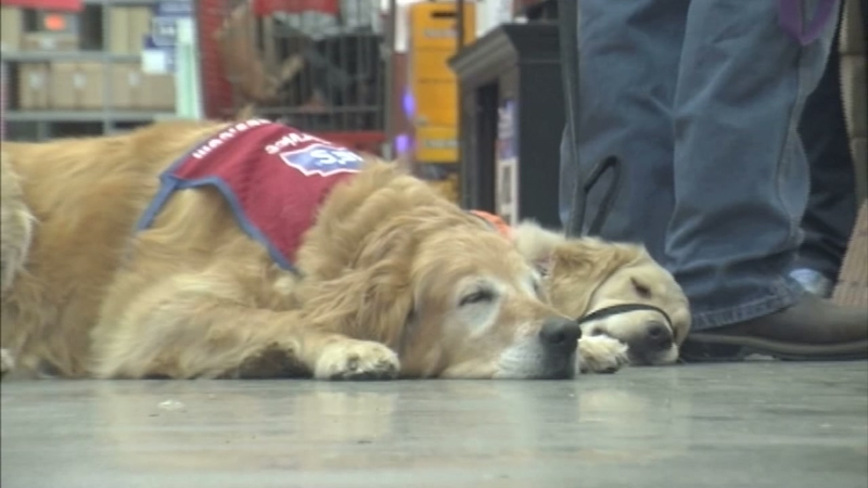 Lowes therapy dog