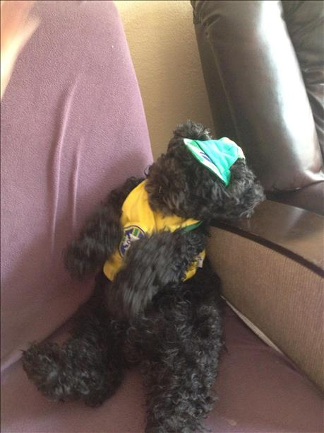 "<div class=""meta image-caption""><div class=""origin-logo origin-image ""><span></span></div><span class=""caption-text"">Kozy the poodle is ready for Brazil to win ! Keep sending in your World Cup fan photos! (photo submitted by Tatyana Mendes via uReport)</span></div>"