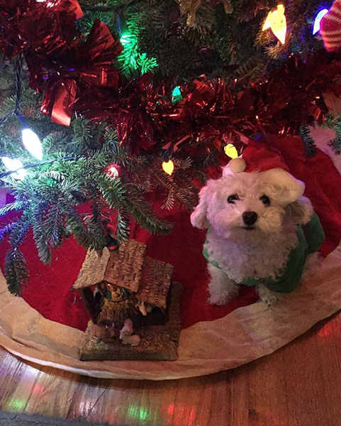 "<div class=""meta image-caption""><div class=""origin-logo origin-image none""><span>none</span></div><span class=""caption-text"">Pictures of pets getting festive for the holidays sent in by our Eyewitness News viewers! (Courtesy: @my_luckys_special/Instagram)</span></div>"