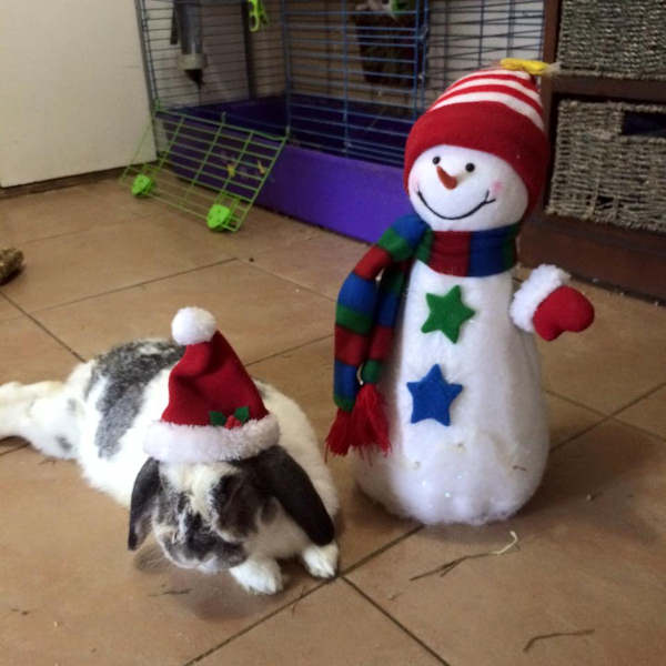 "<div class=""meta image-caption""><div class=""origin-logo origin-image none""><span>none</span></div><span class=""caption-text"">Pictures of pets getting festive for the holidays sent in by our Eyewitness News viewers! (Courtesy: Marie Paese Massa/Facebook)</span></div>"