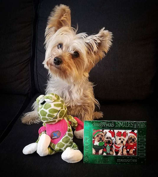 "<div class=""meta image-caption""><div class=""origin-logo origin-image none""><span>none</span></div><span class=""caption-text"">Pictures of pets getting festive for the holidays sent in by our Eyewitness News viewers! (Courtesy: @netinet_and_lulu/Instagram)</span></div>"