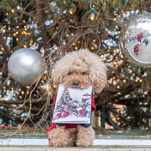 "<div class=""meta image-caption""><div class=""origin-logo origin-image none""><span>none</span></div><span class=""caption-text"">Pictures of pets getting festive for the holidays sent in by our Eyewitness News viewers! (Courtesy: @ted_gram/Instagram)</span></div>"