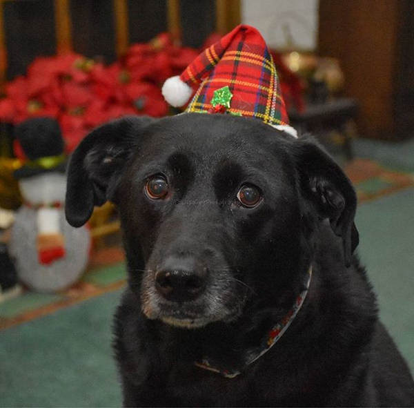 "<div class=""meta image-caption""><div class=""origin-logo origin-image none""><span>none</span></div><span class=""caption-text"">Pictures of pets getting festive for the holidays sent in by our Eyewitness News viewers! (Courtesy: @lisadeyphotography/Instagram)</span></div>"