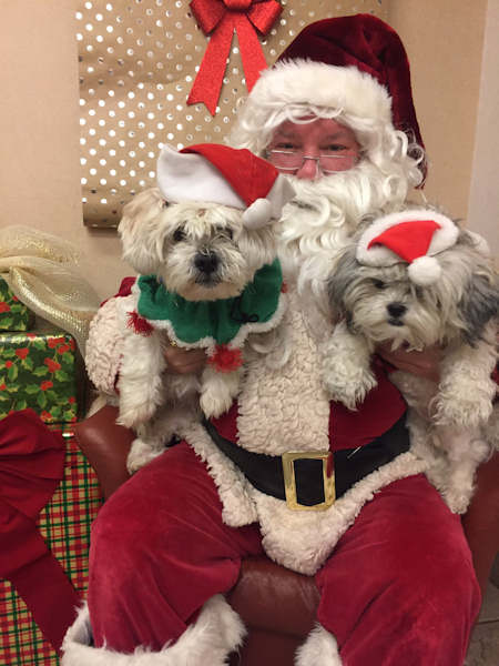 "<div class=""meta image-caption""><div class=""origin-logo origin-image none""><span>none</span></div><span class=""caption-text"">Pictures of pets getting festive for the holidays sent in by our Eyewitness News viewers! (Courtesy: @clemsonJerryLee/Twitter)</span></div>"