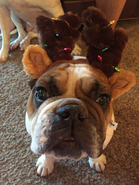 "<div class=""meta image-caption""><div class=""origin-logo origin-image none""><span>none</span></div><span class=""caption-text"">Pictures of pets getting festive for the holidays sent in by our Eyewitness News viewers! (Courtesy: @Mrs_Veissy26/Twitter)</span></div>"