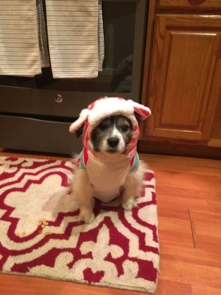"<div class=""meta image-caption""><div class=""origin-logo origin-image none""><span>none</span></div><span class=""caption-text"">Pictures of pets getting festive for the holidays sent in by our Eyewitness News viewers! (Courtesy: @Lyndav106/Twitter)</span></div>"