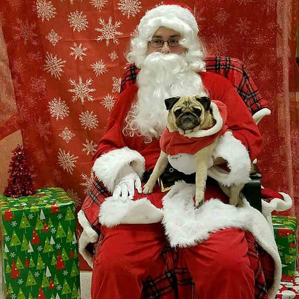 "<div class=""meta image-caption""><div class=""origin-logo origin-image none""><span>none</span></div><span class=""caption-text"">Pictures of pets getting festive for the holidays sent in by our Eyewitness News viewers! (Courtesy: @carolyn.pumpitup/Instagram)</span></div>"