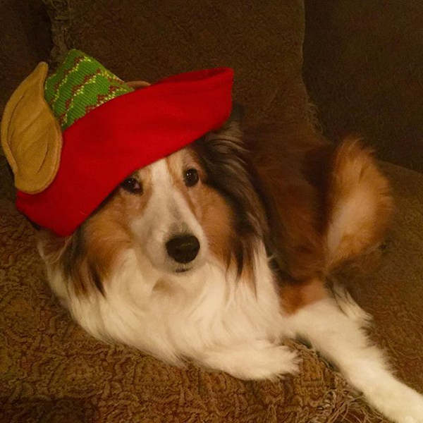 "<div class=""meta image-caption""><div class=""origin-logo origin-image none""><span>none</span></div><span class=""caption-text"">Pictures of pets getting festive for the holidays sent in by our Eyewitness News viewers! (Courtesy: @lola_1963/Instagram)</span></div>"