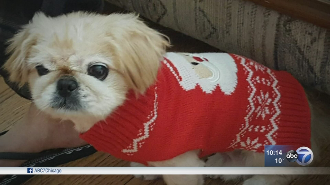 Family asks for help to find dog missing since Southwest Side break-in