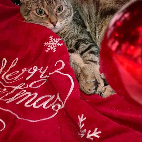 "<div class=""meta image-caption""><div class=""origin-logo origin-image none""><span>none</span></div><span class=""caption-text"">Pictures of pets getting festive for the holidays sent in by our Eyewitness News viewers! (Courtesy: @itisimilo/Instagram)</span></div>"
