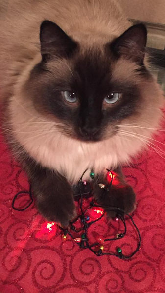 "<div class=""meta image-caption""><div class=""origin-logo origin-image none""><span>none</span></div><span class=""caption-text"">Pictures of pets getting festive for the holidays sent in by our Eyewitness News viewers! (Courtesy: Donna Bass Dugard/Facebook)</span></div>"
