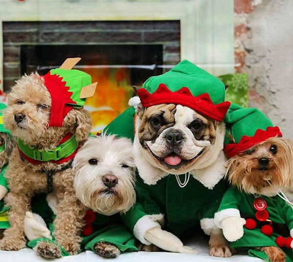"<div class=""meta image-caption""><div class=""origin-logo origin-image none""><span>none</span></div><span class=""caption-text"">Pictures of pets getting festive for the holidays sent in by our Eyewitness News viewers! (Courtesy: @rubiespetshop/Instagram)</span></div>"