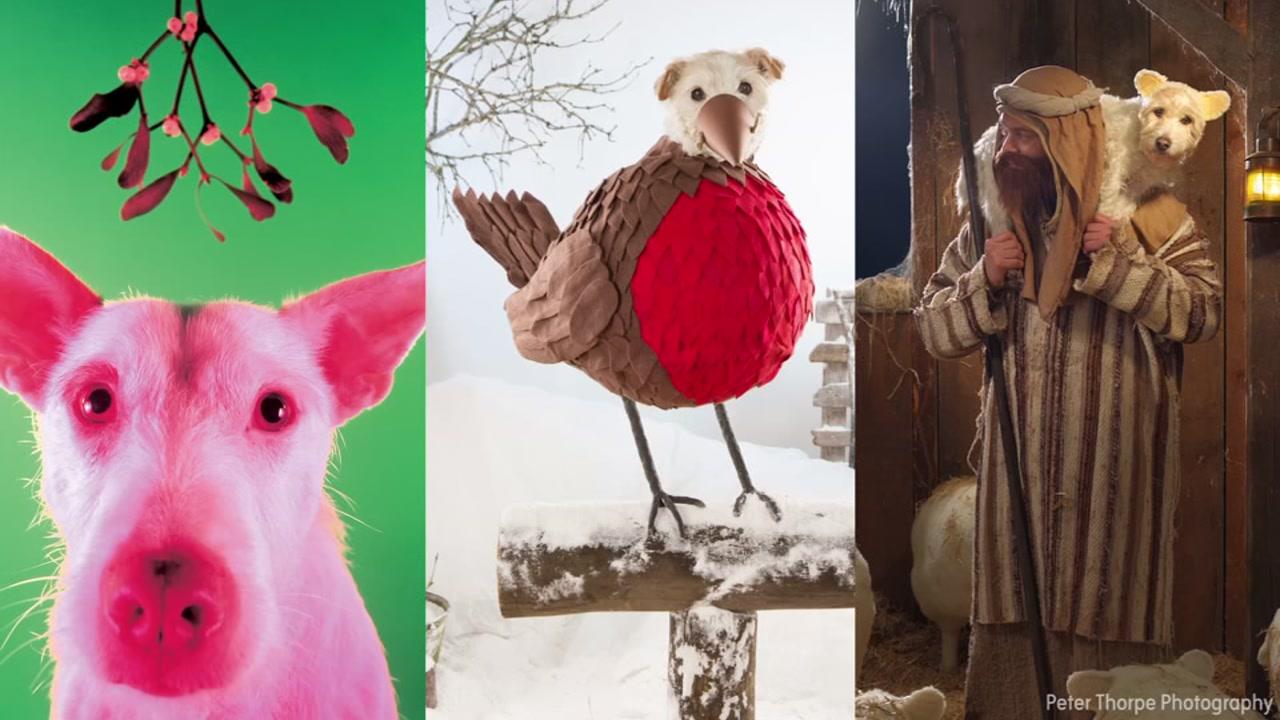Photographer Creates Elaborate Christmas Cards With Family Dog