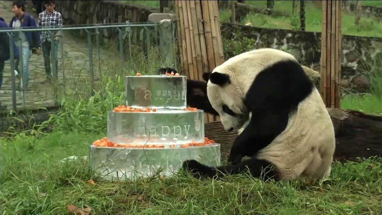 Pan Pan the panda