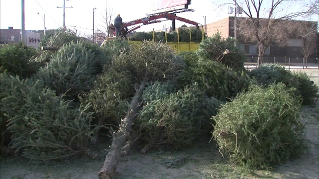 chicago to begin christmas tree recycling next week abc7chicagocom - Chicago Christmas Tree Recycling
