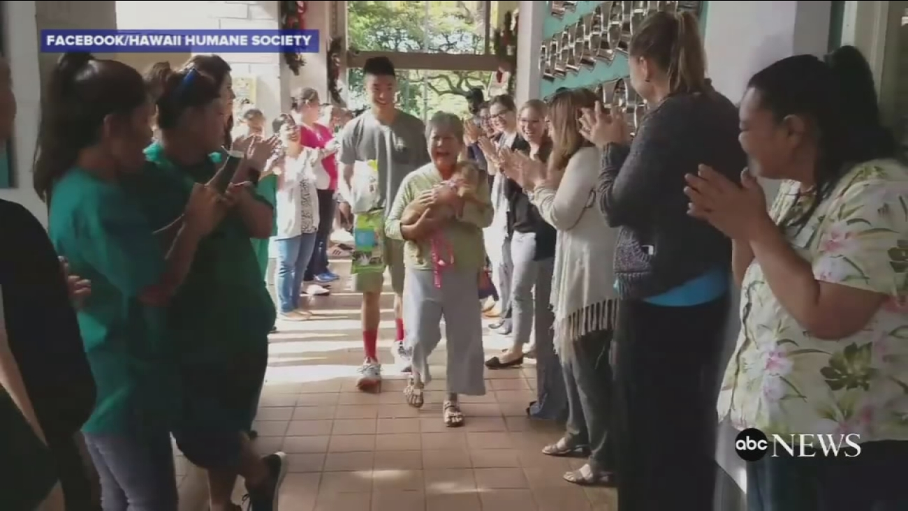 VIDEO: Shelter celebrates as all animals are adopted for first time