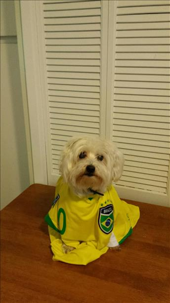 "<div class=""meta image-caption""><div class=""origin-logo origin-image ""><span></span></div><span class=""caption-text"">Kikkoman of Benicia cheering Brazil on! Keep sending in your World Cup fan photos! (photo submitted by Pam Chee via uReport)</span></div>"