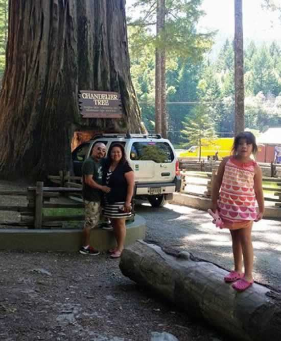 "<div class=""meta image-caption""><div class=""origin-logo origin-image none""><span>none</span></div><span class=""caption-text"">ABC7 viewers shared photos of their visit to the Calaveras, Calif. tunnel tree. The iconic tree toppled over during a massive storm in the Bay Area on Sunday, January 8, 2017. (Photo submitted to KGO-TV by Helen Veliz/Facebook)</span></div>"