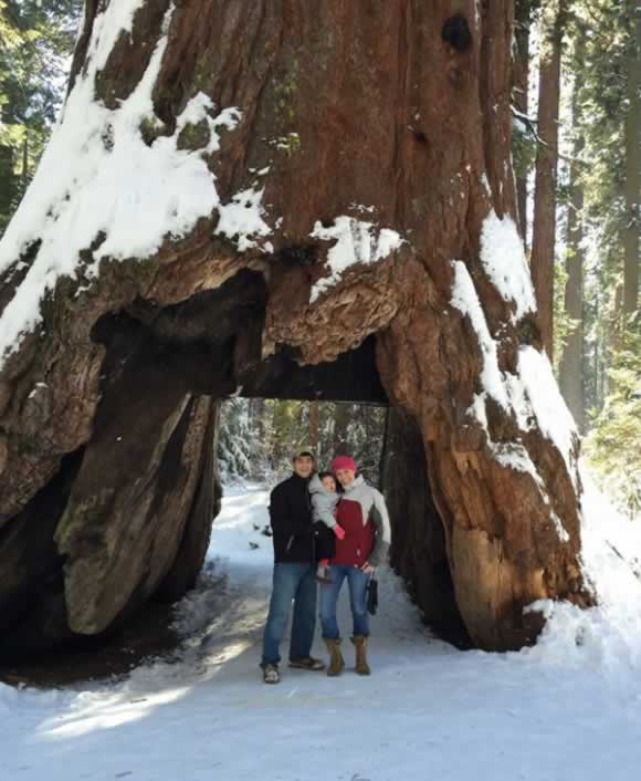 "<div class=""meta image-caption""><div class=""origin-logo origin-image none""><span>none</span></div><span class=""caption-text"">ABC7 viewers shared photos of their visit to the Calaveras, Calif. tunnel tree. The iconic tree toppled over during a massive storm in the Bay Area on Sunday, January 8, 2017. (Photo submitted to KGO-TV by Laura Rivera/Facebook)</span></div>"