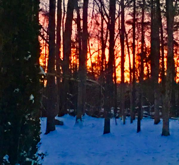 """<div class=""""meta image-caption""""><div class=""""origin-logo origin-image wtvd""""><span>WTVD</span></div><span class=""""caption-text"""">Pretty sunset in a wooded area of Hurdle Mills! (Barbara Martin-Dowell - ABC11 Eyewitness)</span></div>"""