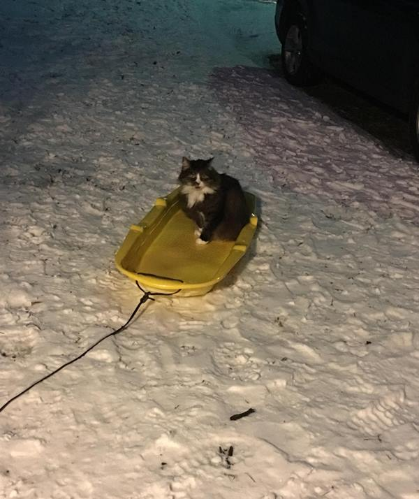 """<div class=""""meta image-caption""""><div class=""""origin-logo origin-image wtvd""""><span>WTVD</span></div><span class=""""caption-text"""">Snookie the cat doesn't want the snow to melt! (Jeremy Collins - ABC11 Eyewitness)</span></div>"""