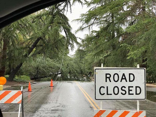 <div class='meta'><div class='origin-logo' data-origin='none'></div><span class='caption-text' data-credit='Elizabeth Kirby'>Tree falls on Christmas Tree Lane (Van Ness) in Fresno</span></div>
