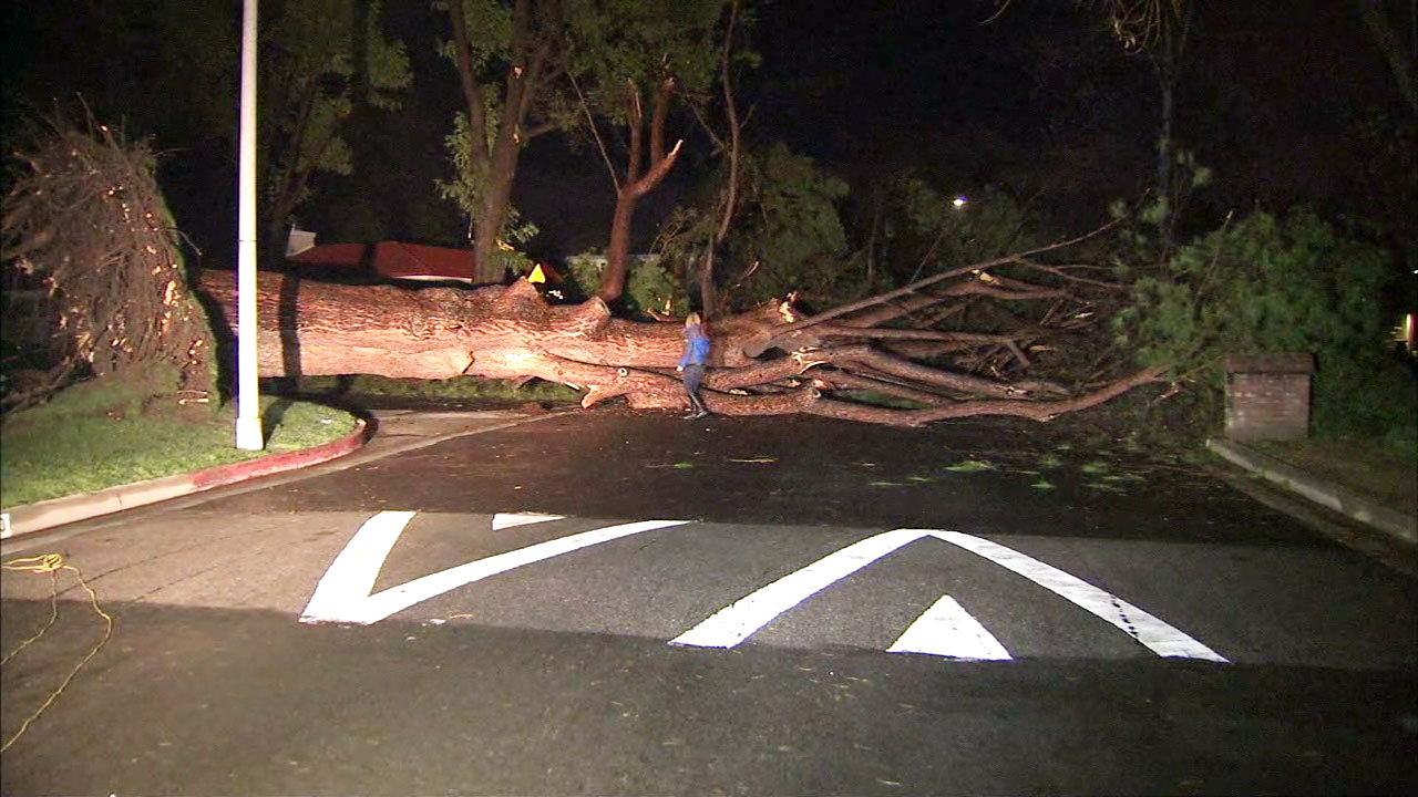 A massive toppled tree blocks a street in Northridge on Friday, Jan. 13, 2017, after days of stormy weather.