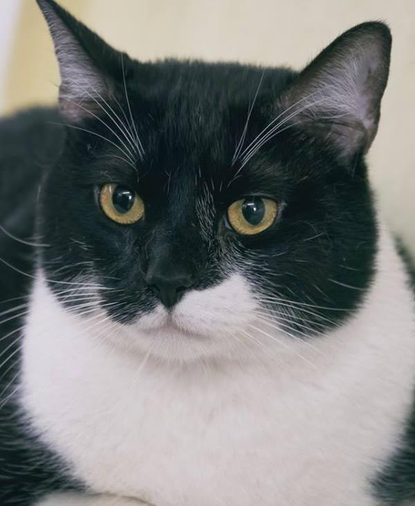 <div class='meta'><div class='origin-logo' data-origin='KTRK'></div><span class='caption-text' data-credit=''>Cats in Webster have been living in an animal shelter for more than a year</span></div>
