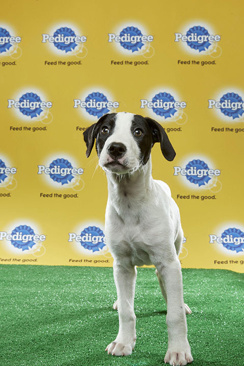 "<div class=""meta image-caption""><div class=""origin-logo origin-image none""><span>none</span></div><span class=""caption-text"">Sully, for Team Ruff, is a 12-week-old spaniel mix. He's from New Hampshire. (Animal Planet)</span></div>"