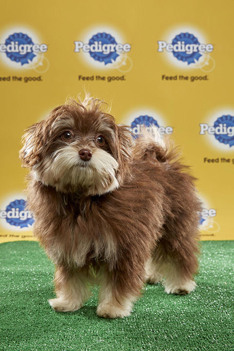 "<div class=""meta image-caption""><div class=""origin-logo origin-image none""><span>none</span></div><span class=""caption-text"">Slippers, for Team Fluff, is a 17-week-old Pomeranian/Havanese mix. She's from Illinois. (Animal Planet)</span></div>"