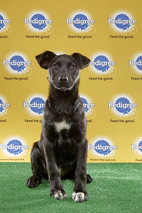 "<div class=""meta image-caption""><div class=""origin-logo origin-image none""><span>none</span></div><span class=""caption-text"">Sable, for Team Fluff, is a 14-week-old husky/Lab mix. She's from Ohio. (Animal Planet)</span></div>"