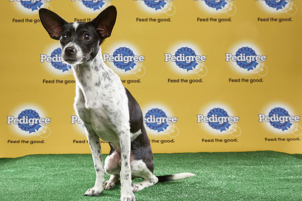 "<div class=""meta image-caption""><div class=""origin-logo origin-image none""><span>none</span></div><span class=""caption-text"">Ricky, for Team Ruff, is a 16-week-old terrier mix. He's from Tennessee. (Animal Planet)</span></div>"