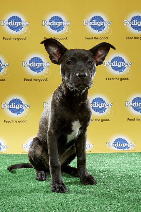 "<div class=""meta image-caption""><div class=""origin-logo origin-image none""><span>none</span></div><span class=""caption-text"">Stretch, for Team Fluff, is a 19-week-old terrier mix. He's from Missouri. (Animal Planet)</span></div>"