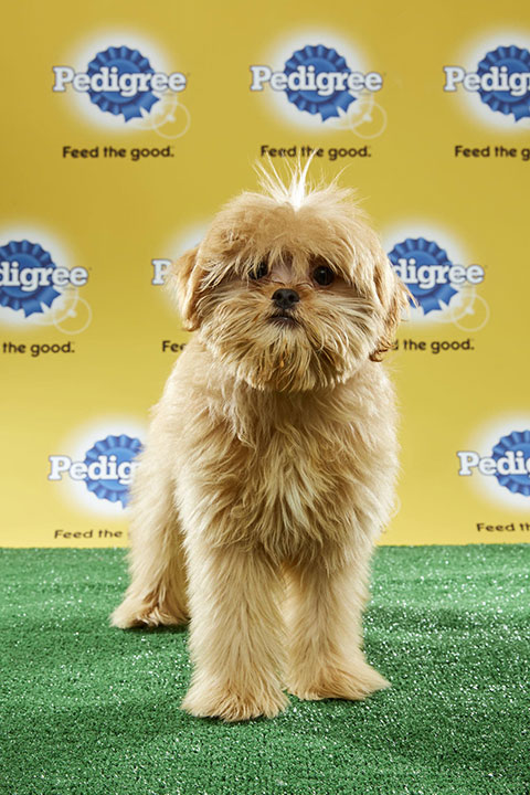 "<div class=""meta image-caption""><div class=""origin-logo origin-image none""><span>none</span></div><span class=""caption-text"">Rory, for Team Fluff, is a 17-week-old poodle mix. He's from Florida. (Animal Planet)</span></div>"