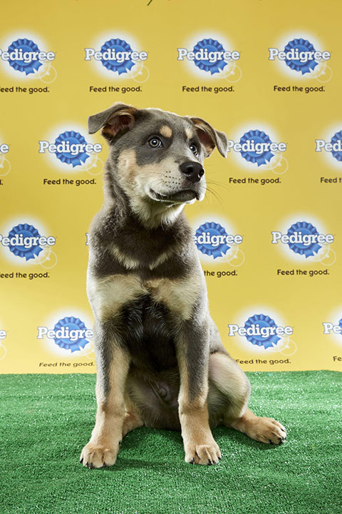 "<div class=""meta image-caption""><div class=""origin-logo origin-image none""><span>none</span></div><span class=""caption-text"">Nyquist, for Team Fluff, is a 15-week-old husky/shepherd mix. He's from New Jersey. (Animal Planet)</span></div>"