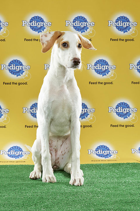 "<div class=""meta image-caption""><div class=""origin-logo origin-image none""><span>none</span></div><span class=""caption-text"">Hope, for Team Fluff, is a 19-week-old Labrador/hound mix. She's from New York. (Animal Planet)</span></div>"
