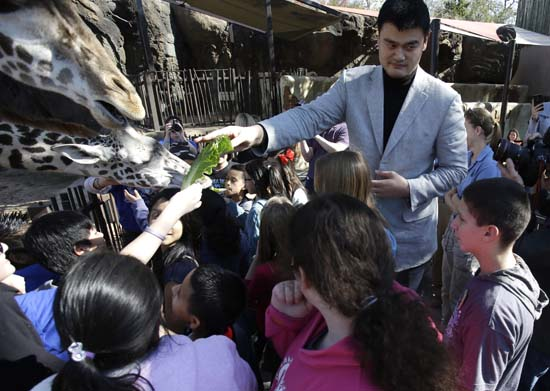 "<div class=""meta image-caption""><div class=""origin-logo origin-image ktrk""><span>KTRK</span></div><span class=""caption-text"">Former Houston Rockets basketball player Yao Ming joins a group of schoolchildren to feed the giraffes at the Houston Zoo on Thursday, Feb. 14, 2013. (AP Photo/Pat Sullivan) (AP)</span></div>"