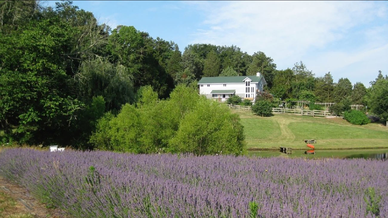 A North Carolina woman wants to give her farm away in an essay contest.