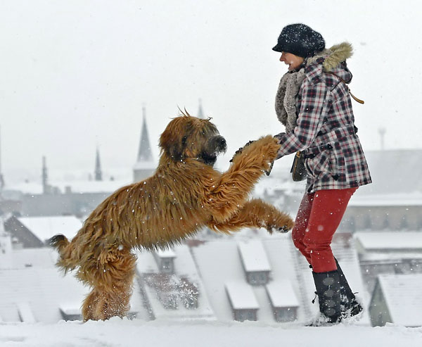 "<div class=""meta image-caption""><div class=""origin-logo origin-image none""><span>none</span></div><span class=""caption-text"">Sabine Conrad plays with her French sheepdog El Lobo in front of the snow covered skyline of Erfurt, central Germany, Thursday, Jan. 17, 2013. ((AP Photo/Jens Meyer))</span></div>"