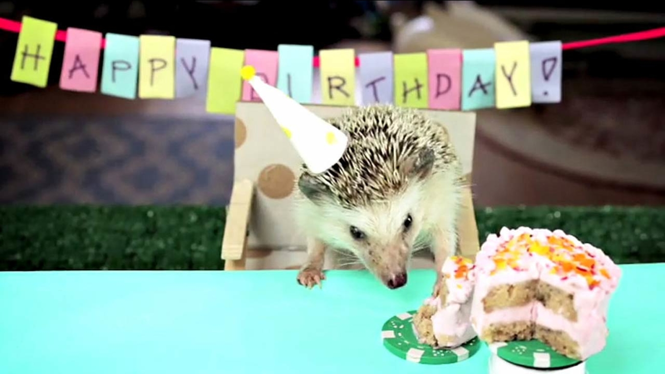 Fine This Tiny Hedgehog With His Tiny Birthday Cake Will Make Your Day Birthday Cards Printable Opercafe Filternl