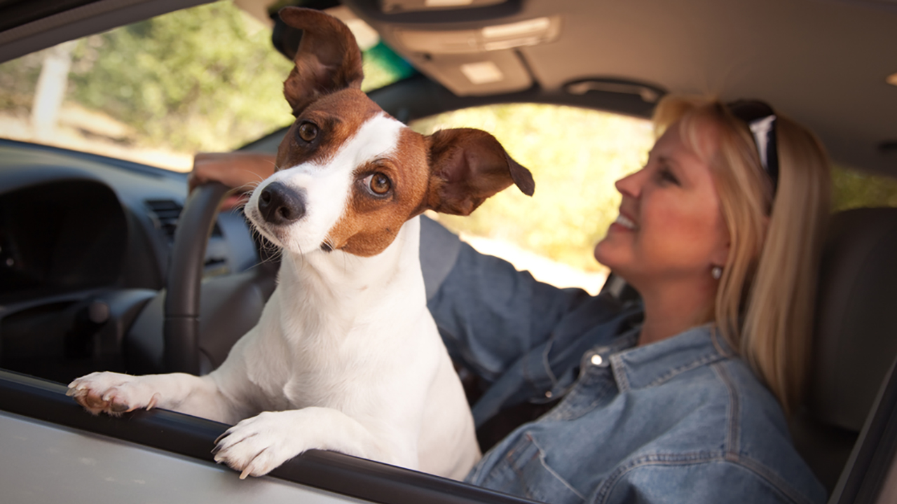 Stock photo of a dog in a car
