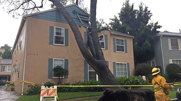 "<div class=""meta image-caption""><div class=""origin-logo origin-image kabc""><span>KABC</span></div><span class=""caption-text"">ABC7 viewer Alejandro Cabrera shared this photo of a toppled tree in Westwood on Friday, Feb. 17, 2017. (ABC7 viewer Alejandro Cabrera)</span></div>"