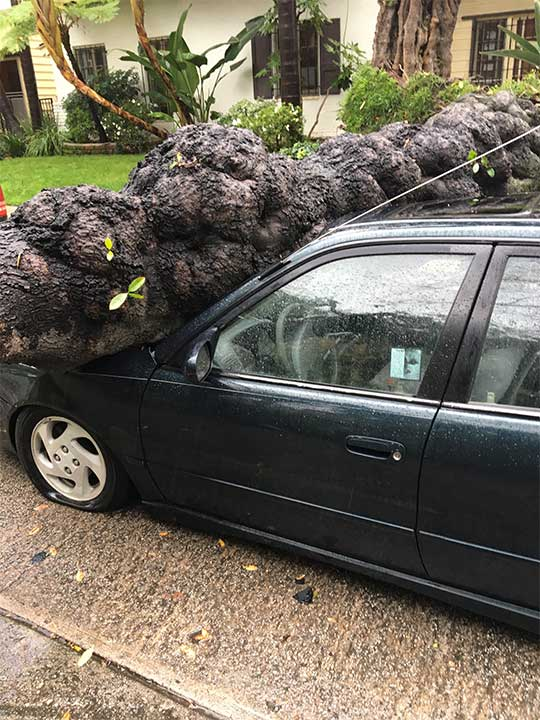 "<div class=""meta image-caption""><div class=""origin-logo origin-image kabc""><span>KABC</span></div><span class=""caption-text"">ABC7 viewer Bill Jurney shared this photo of a toppled tree in the Miracle Mile District on Friday, Feb. 17, 2017. (ABC7 viewer Bill Jurney)</span></div>"
