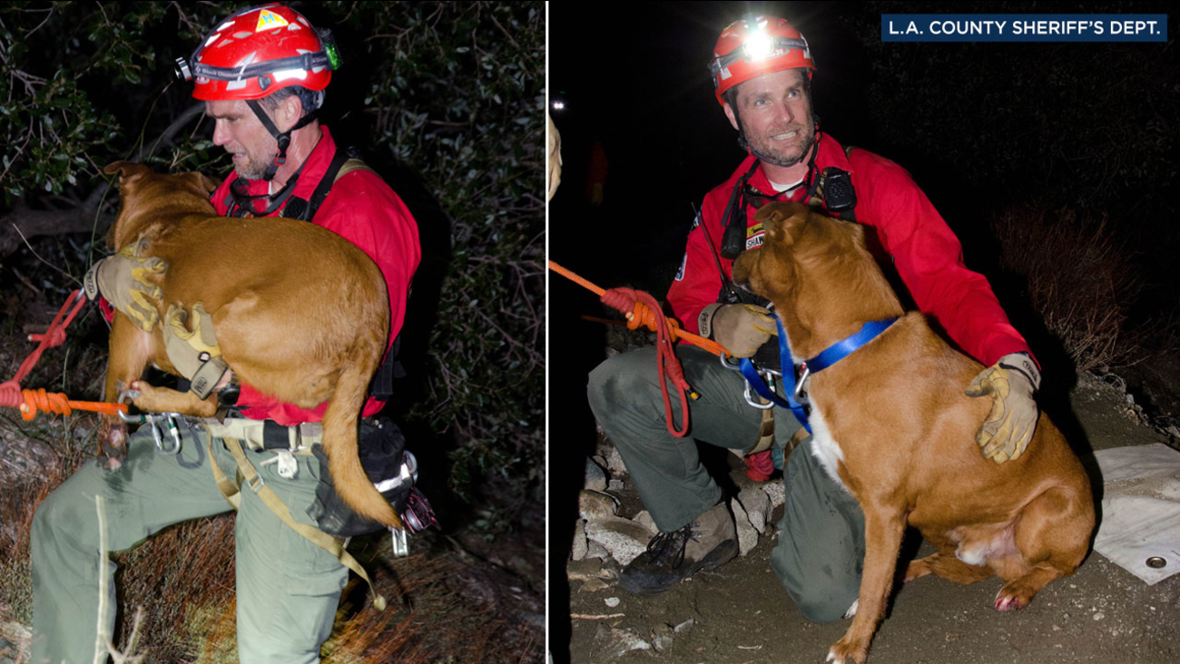 A rescue crew member is shown with Zeus, a 40-pound pit bull mix, secured in a rope harness as he's rescued in the Angeles National Forest on Friday, Feb. 24, 2017.